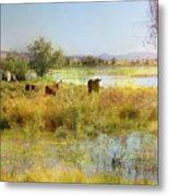 Cows In The Desert Metal Print