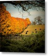 Cows In The Meadow Metal Print by Joyce Kimble Smith