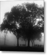 Cows In The Mist Metal Print by David Mcchesney
