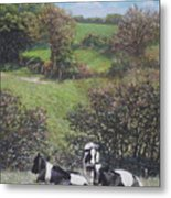 Cows Sitting By Hill Relaxing Metal Print