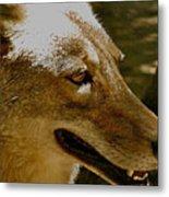 Coyote Profile Metal Print