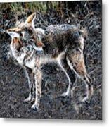 Coyote Waits Metal Print