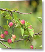 Crab Apple Fruit Metal Print