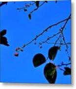 Crab Apples Blue Sky 6510 Metal Print