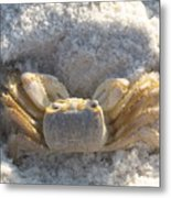 Crab On The Beach Metal Print