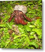 Crab On The Move Metal Print
