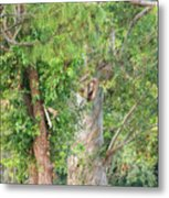 Craggy Tree For Will Metal Print