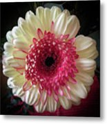 Cranberry And White Metal Print