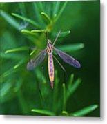Crane Fly Metal Print