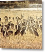 Cranes In The Morning Mist Metal Print