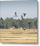 Cranes Over Ethiopia Metal Print