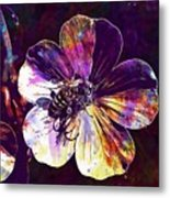 Cranesbill Flower Close Bee Insect  Metal Print