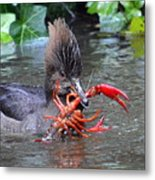 Crayfish? Metal Print