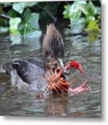 Crayfish Lunch Metal Print