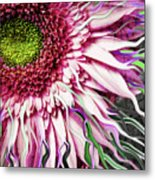Crazy Daisy Metal Print by Christopher Beikmann