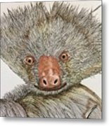 Crazy Two Toed Sloth Metal Print