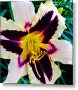 Cream And Purple Lily Macro Metal Print