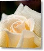 Cream Rose Kisses Metal Print by Lisa Knechtel
