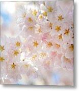 Creamy Blossoms Metal Print
