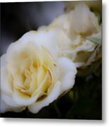 Creamy Dreamy Rose Metal Print