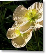 Creamy Poppies Metal Print