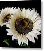 Creamy Sunflowers Metal Print