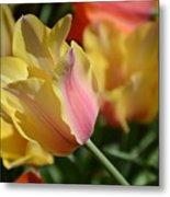 Creamy Yellow Tulip Metal Print