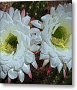 Created By A Cactus Metal Print