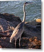 Creatures Of The Gulf - Ever Watchful Metal Print