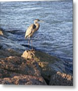 Creatures Of The Gulf - Keeping My Head Down Metal Print