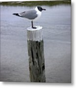 Creatures Of The Gulf - Keeping Watch Metal Print