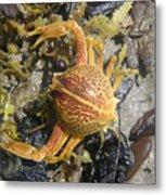 Creatures Of The Gulf - Lost Treasure Metal Print