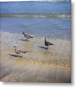 Creatures Of The Gulf - Morning Walk Metal Print