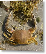 Creatures Of The Gulf - Taking Shore Leave Metal Print