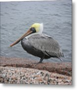 Creatures Of The Gulf - The Squatter Metal Print
