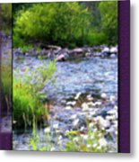 Creek Daisys Metal Print