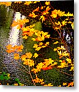 Creekside Colors Metal Print