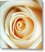 Creme Rose Metal Print