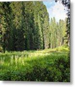 Crescent Meadow In Sequoia Metal Print