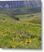 Crested Butte Valley Metal Print