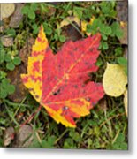 Crimson And Clover Metal Print