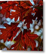 Crimson Oak Metal Print