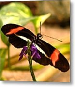 Crimson Patched Longwing 2 Metal Print