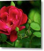 Crimson Red Rose By Kaye Menner Metal Print