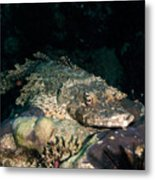 Crocodile Fish On Coral Metal Print