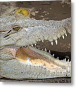 Crocodile Rock Metal Print