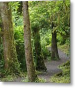 Crooked Little Path Metal Print