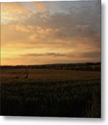 Crops At Sunset Metal Print