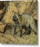 Cross Fox On Red Rocks Metal Print