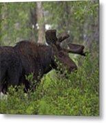 Cross Moose Metal Print
